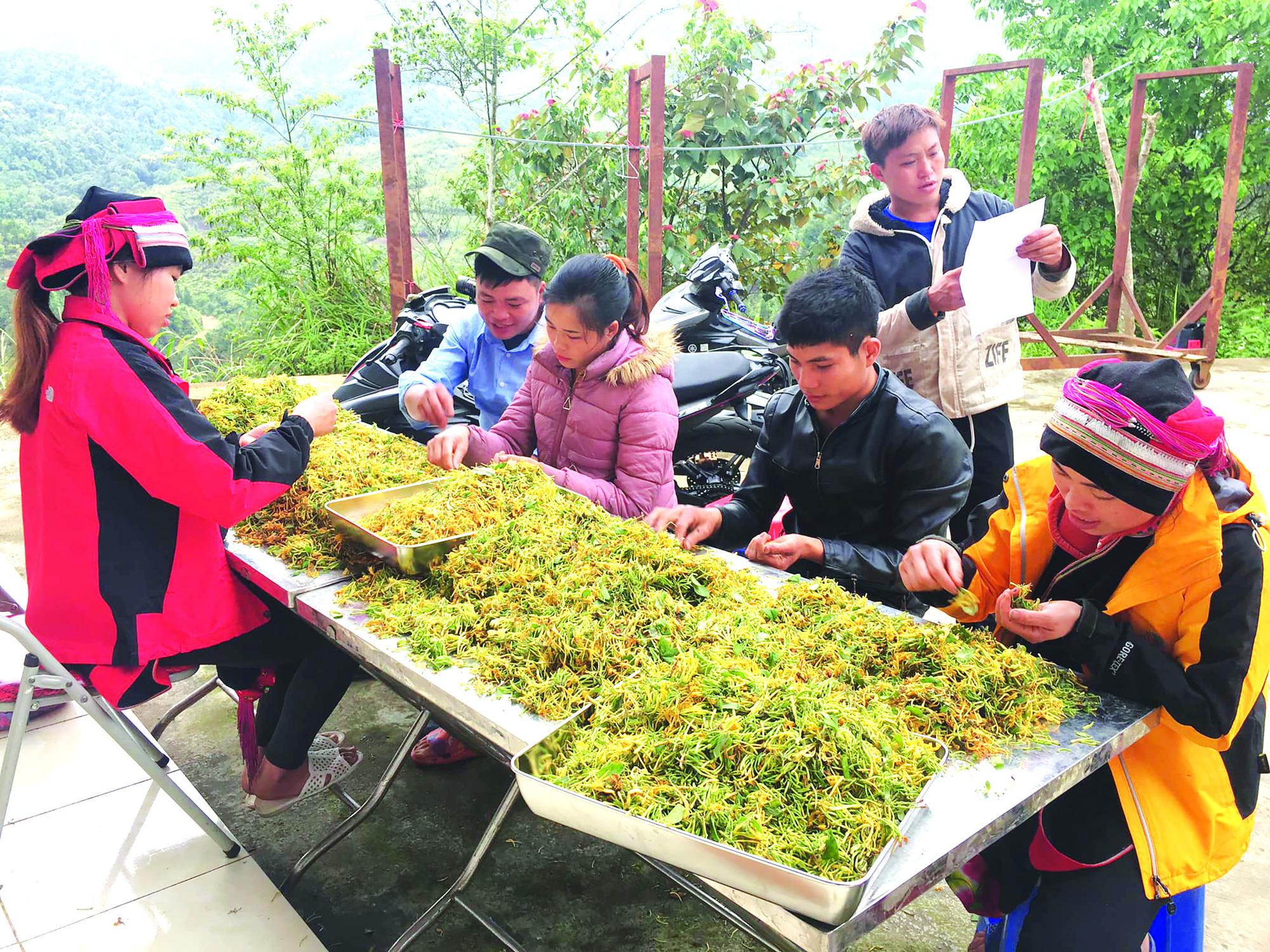 Người Dao ở Nặm Đăm làm du lịch, trồng cây dược liệu thu tiền tỷ - Ảnh 1.