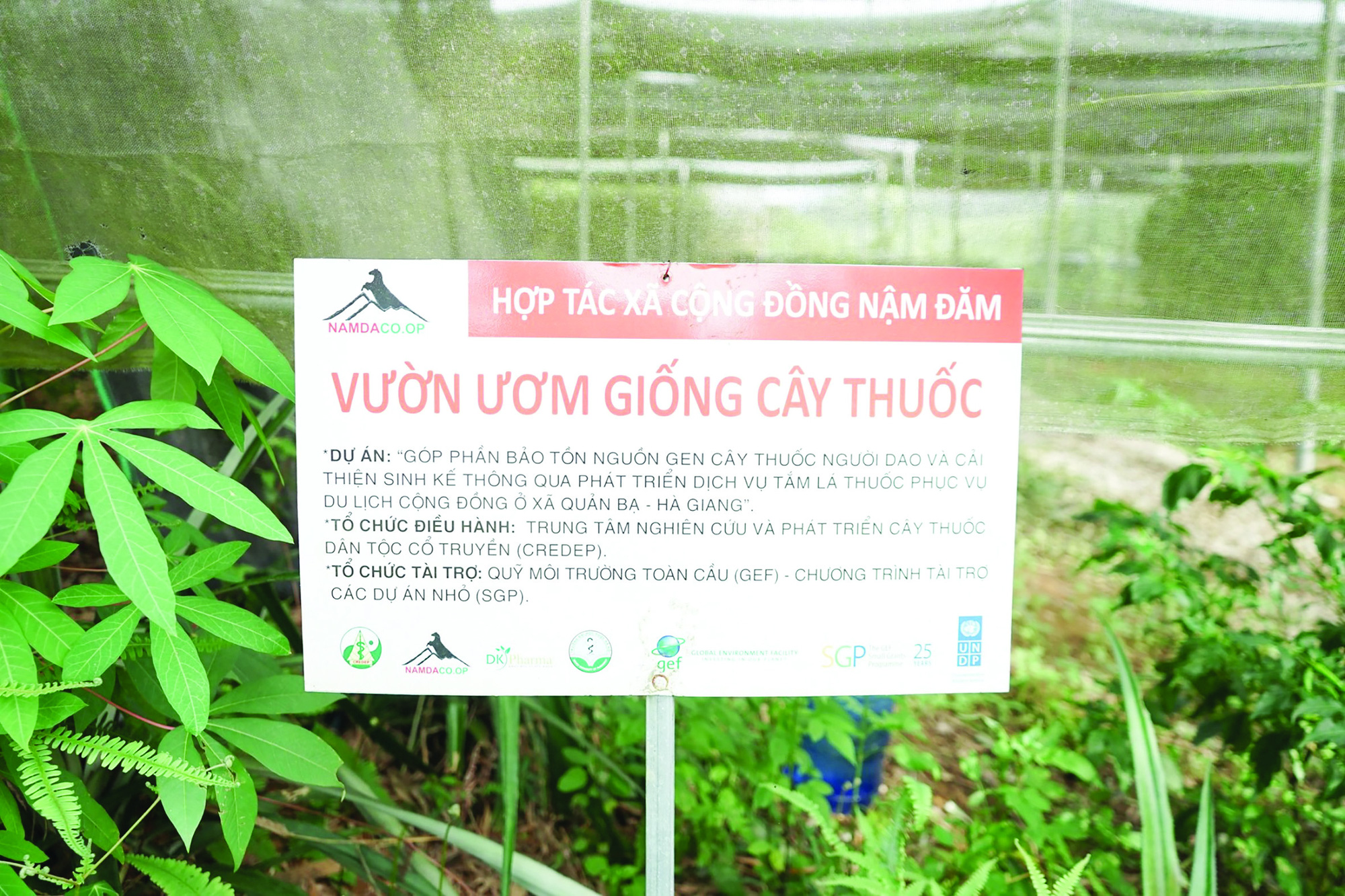 Người Dao ở Nặm Đăm làm du lịch, trồng cây dược liệu thu tiền tỷ - Ảnh 5.