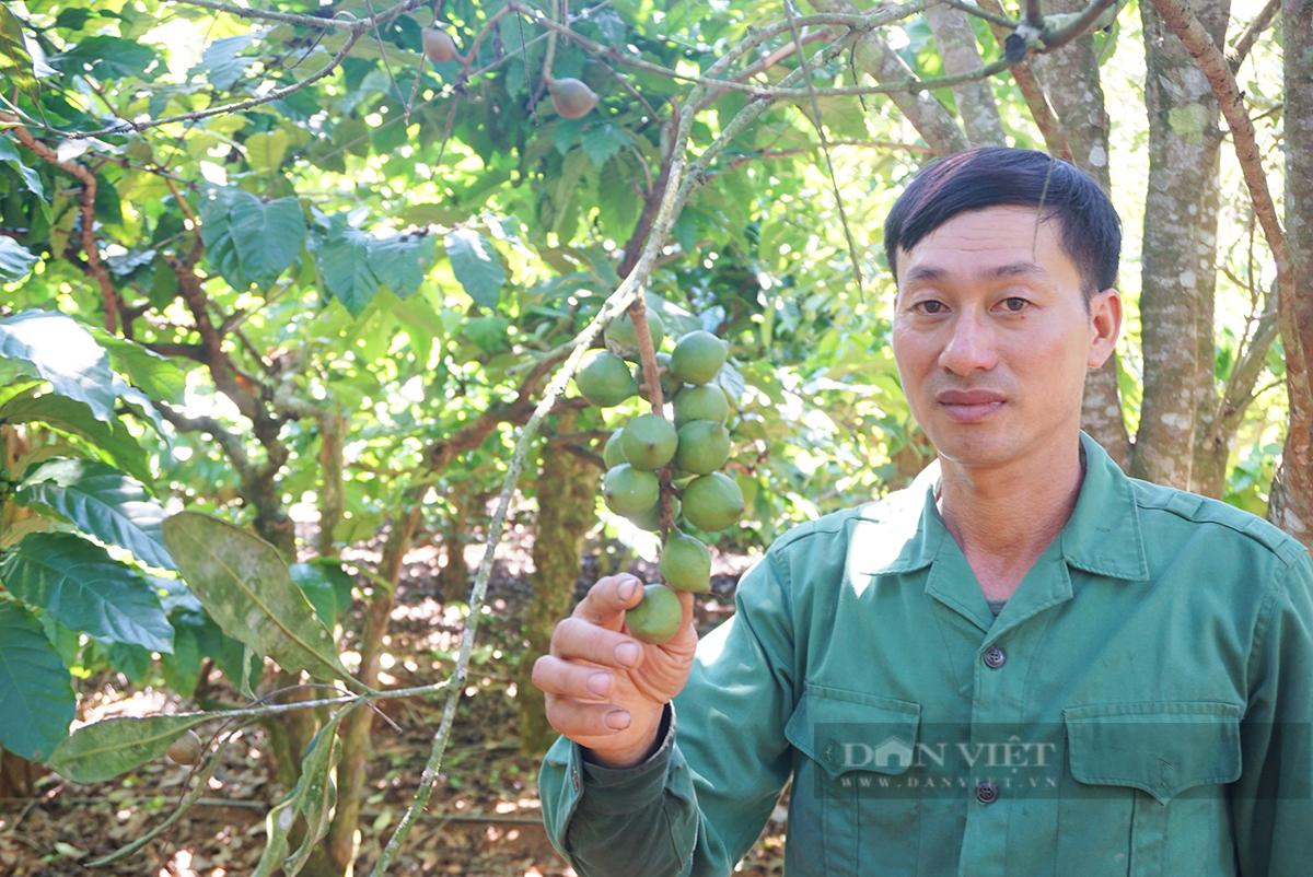 """Nhờ """"cây xóa nghèo"""", anh nông dân trồng thập cẩm thu hơn 400 triệu/ha - Ảnh 1."""