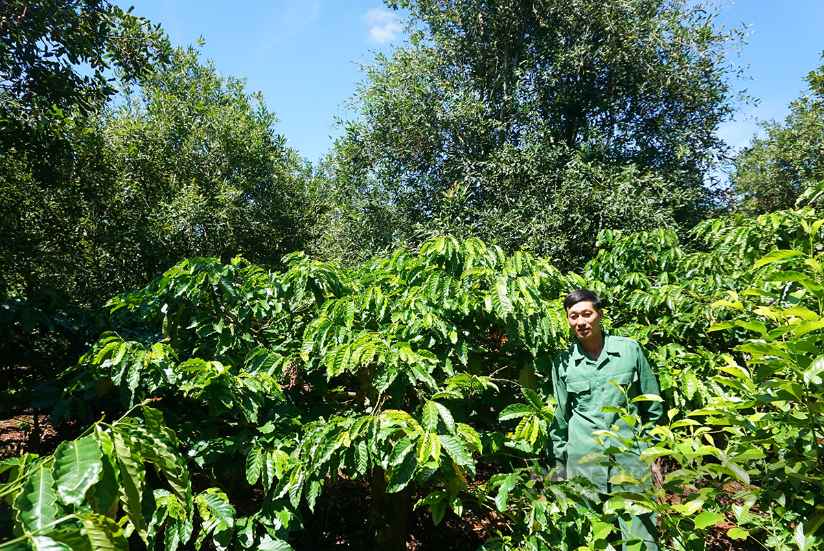 """Nhờ """"cây xóa nghèo"""", anh nông dân trồng thập cẩm thu hơn 400 triệu/ha - Ảnh 3."""