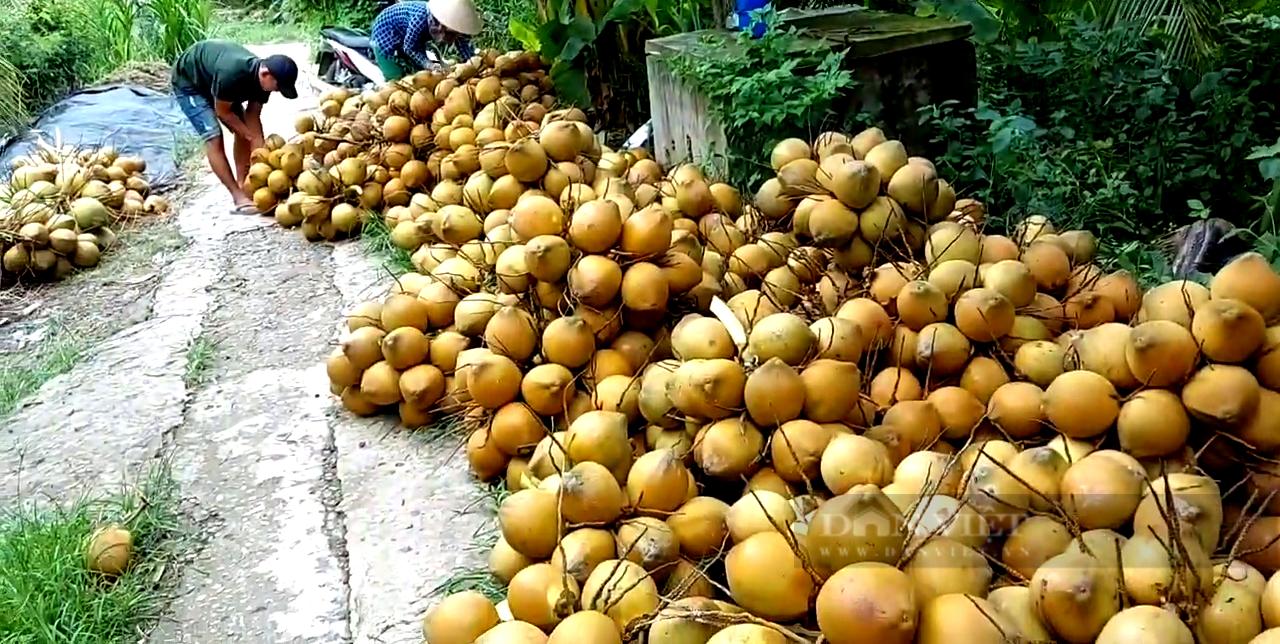 Tiền Giang: Trồng loại cây siêu lùn ra chi chít trái, cho nước thơm ngon, ông nông dân thu tiền tỷ mỗi năm