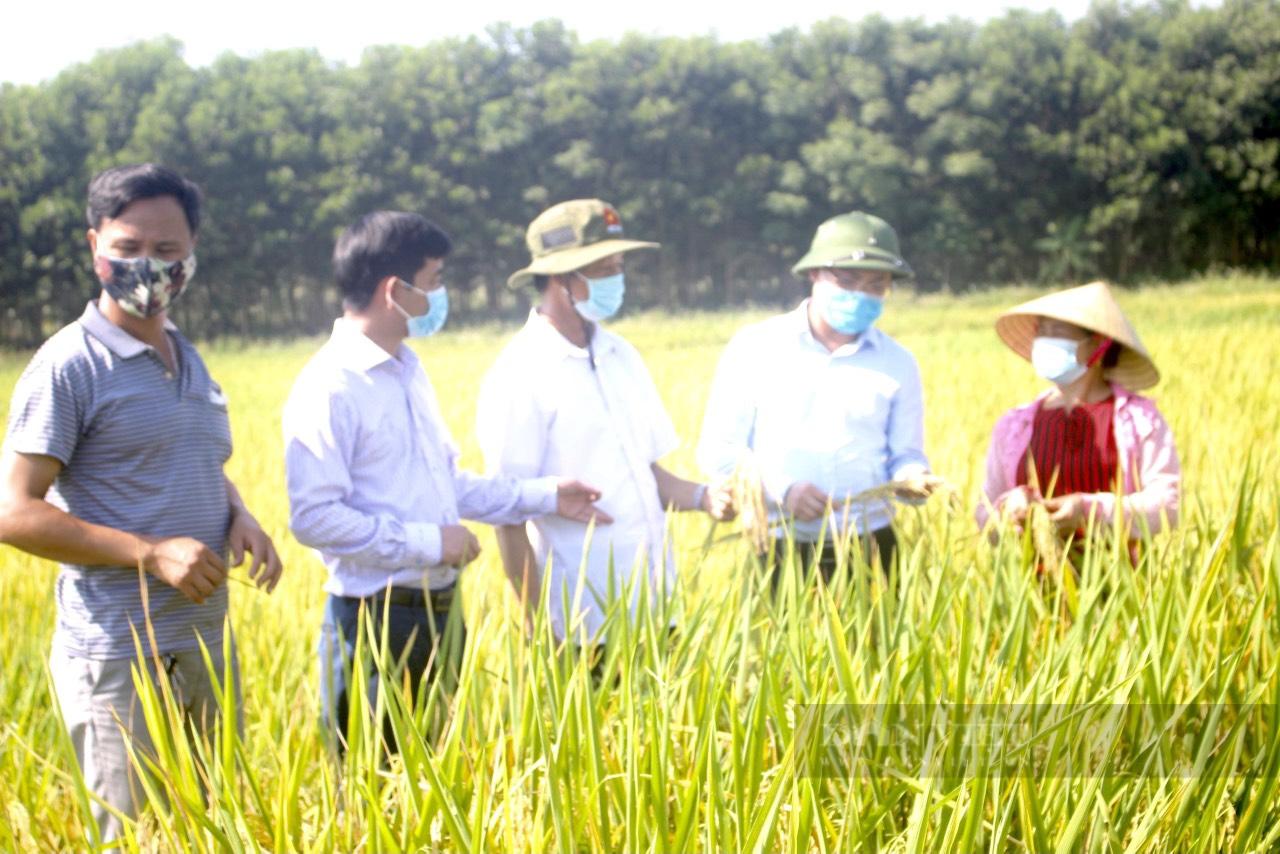 """Những nông dân """"bám đất, bám ruộng"""" làm giàu trong dịch Covi-19 ở Thanh Hoá - Ảnh 1."""
