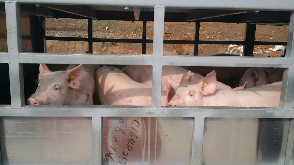 """Giá bán lẻ thịt lợn cao """"vô lý"""" trên thị trường nội địa, chuyên gia """"giải mã"""" lý do và hiến kế khắc phục - Ảnh 1."""