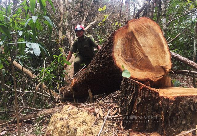 base64 1627897491629888113226 Đắk Lắk: Để mất rừng gây thiệt hại gần 30 tỷ đồng, giám đốc và 8 thuộc cấp bị truy tố