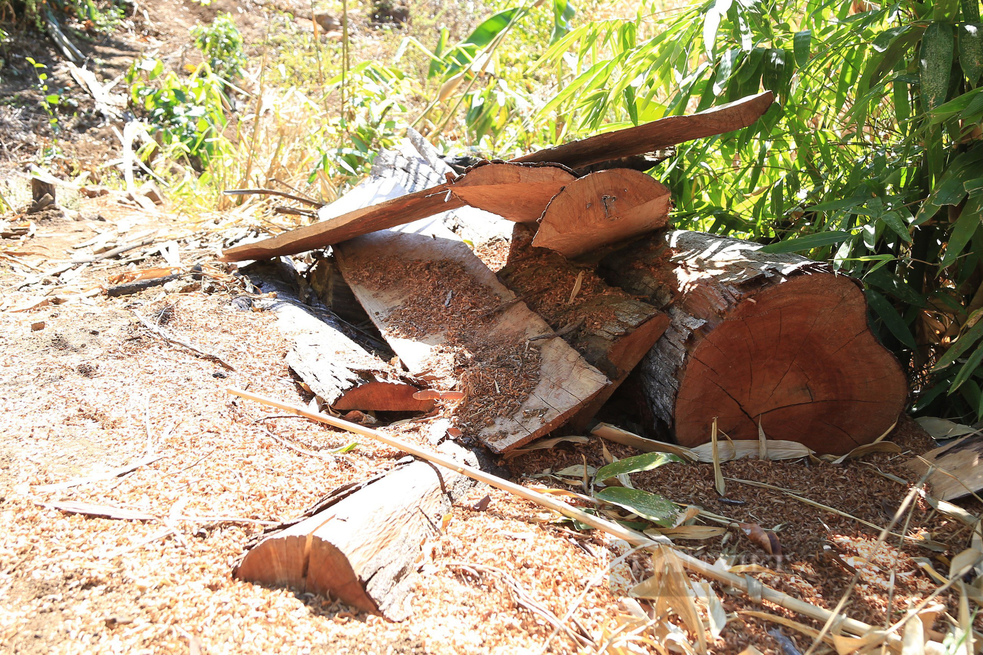 base64 1627897491668306887826 Đắk Lắk: Để mất rừng gây thiệt hại gần 30 tỷ đồng, giám đốc và 8 thuộc cấp bị truy tố