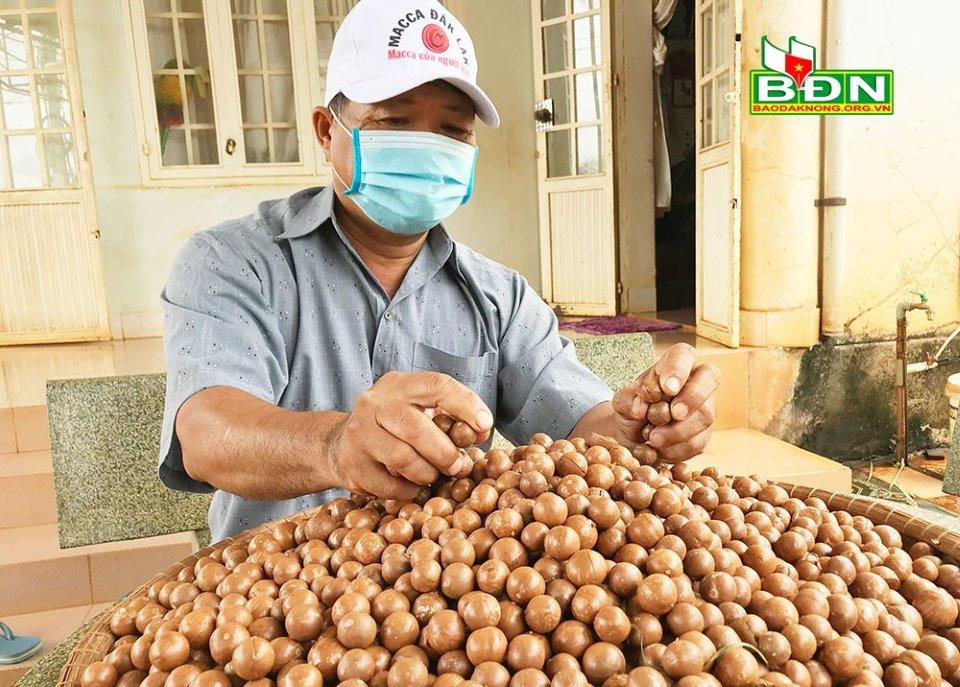 """Đắk Nông: Giữa mùa dịch nông dân hái thứ trái gì mỏi cả tay, may mà giá bán vẫn """"ngon lành""""? - Ảnh 1."""