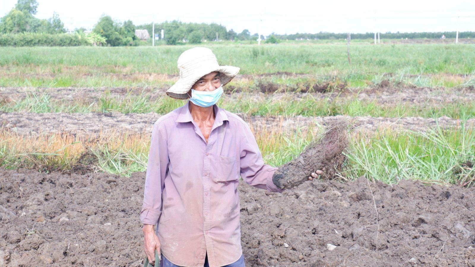 Long An: Vùng đất dân trồng thứ cây dây leo lung tung, cuốc lên toàn củ to bự, giữa mùa dịch lại bán trúng giá - Ảnh 1.