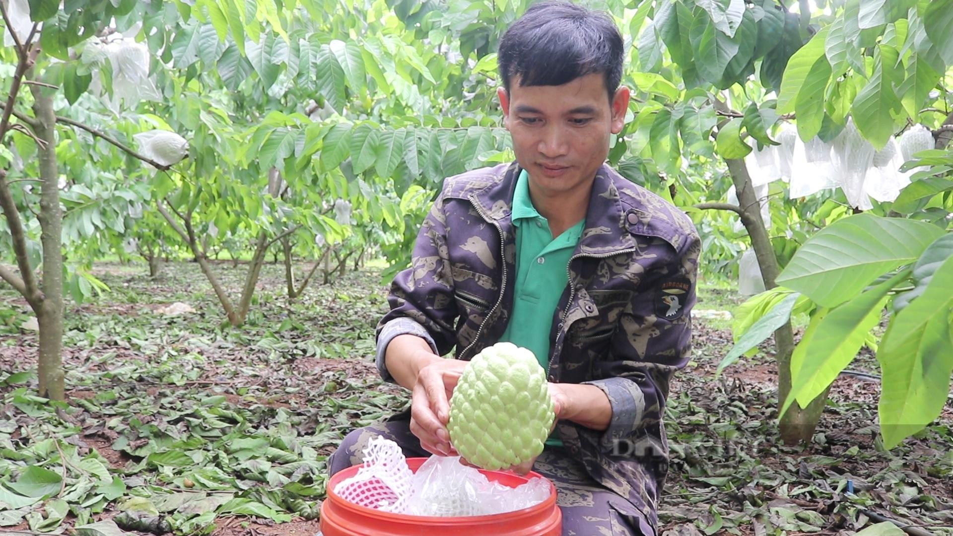 Sơn La: Nông dân người Thái thu tiền tỷ từ loại cây ra trái khổng lồ - Ảnh 2.