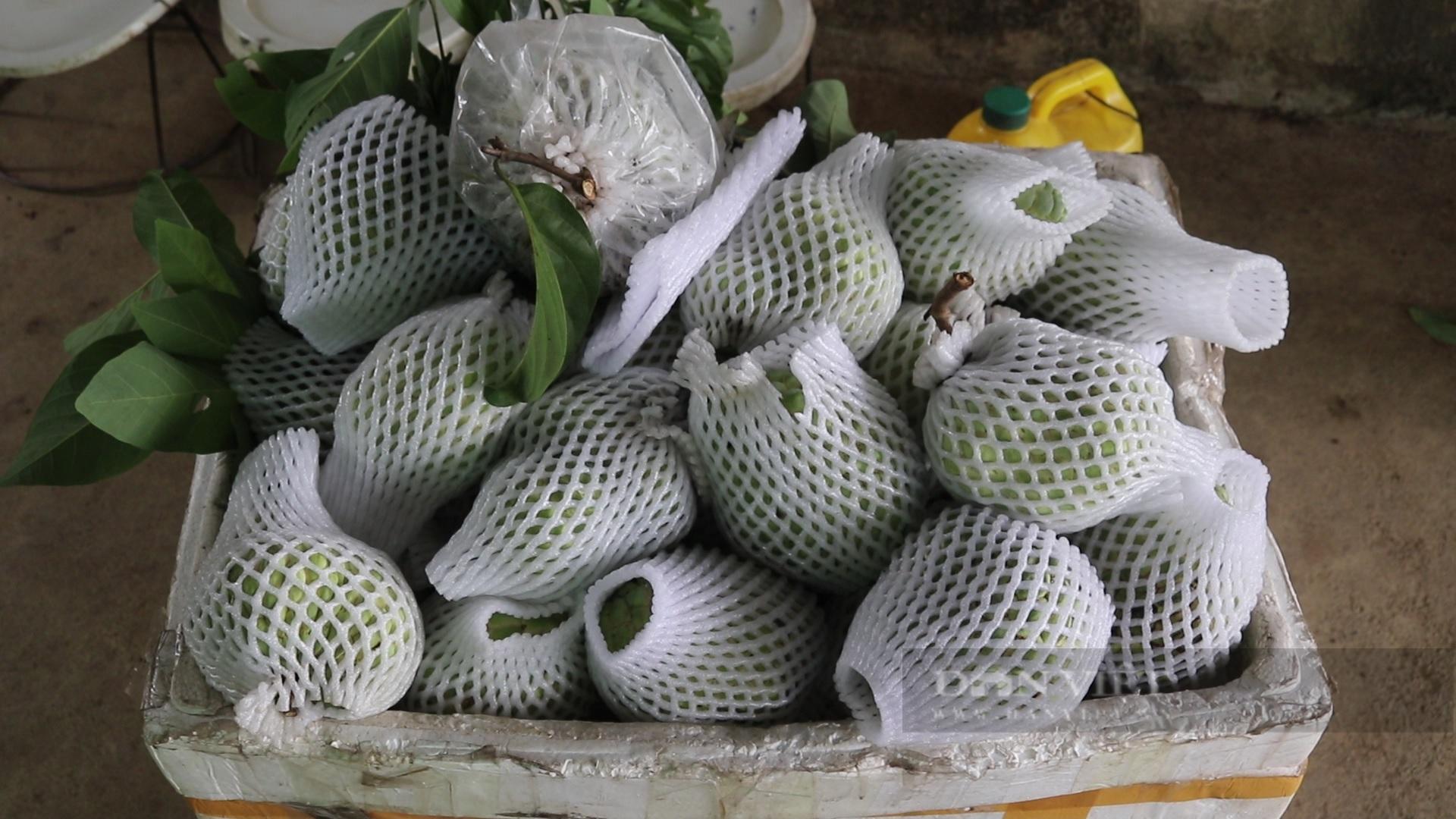 Sơn La: Nông dân người Thái thu tiền tỷ từ loại cây ra trái khổng lồ - Ảnh 6.