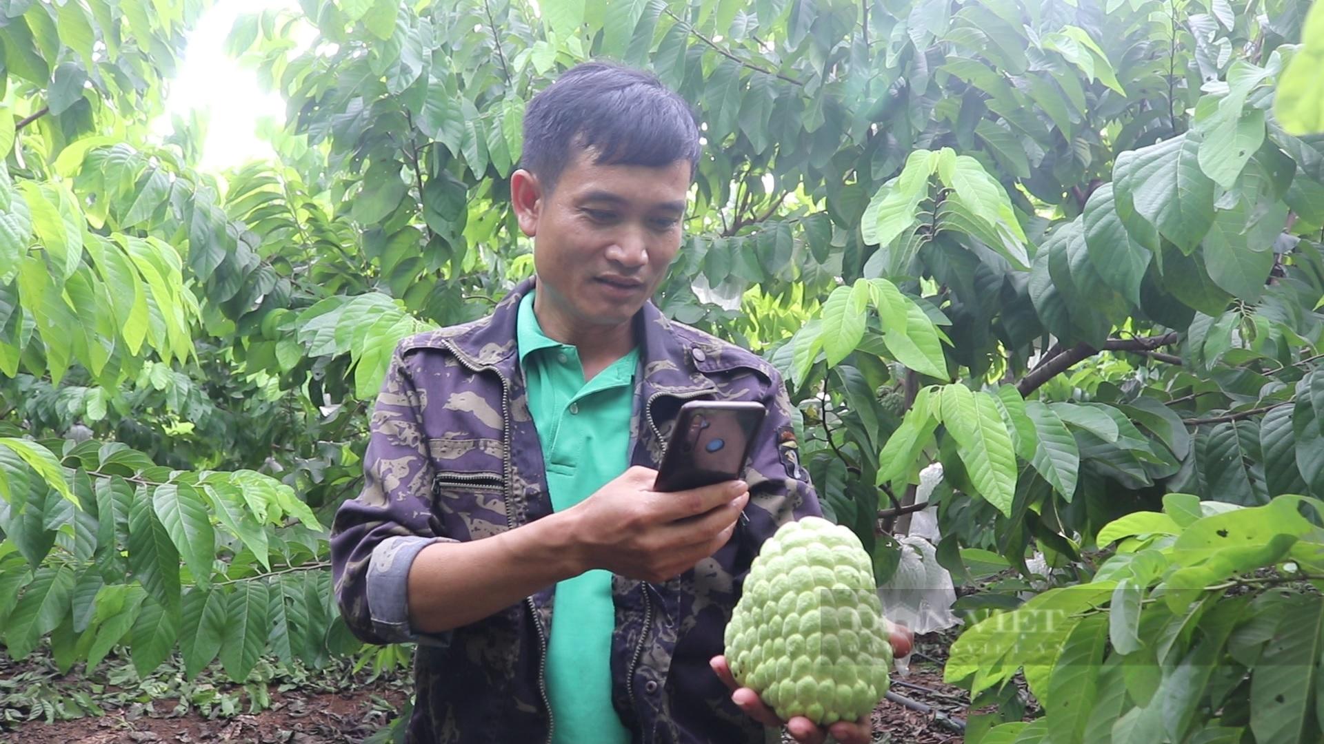 Sơn La: Nông dân người Thái thu tiền tỷ từ loại cây ra trái khổng lồ - Ảnh 7.