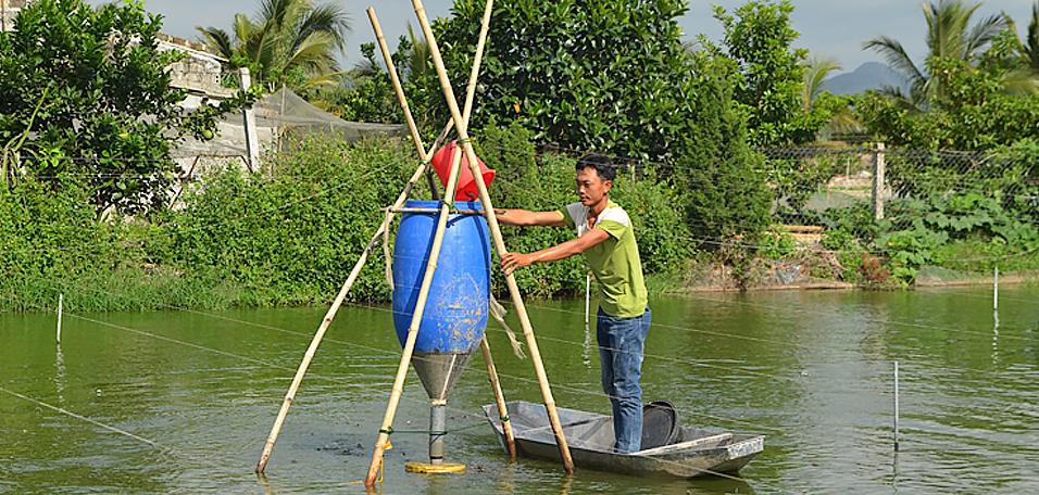 """Nam Định: Nuôi loài cá đặc sản ăn được cả thịt lẫn xương, có bao nhiêu thương lái """"ôm"""" hết - Ảnh 1."""