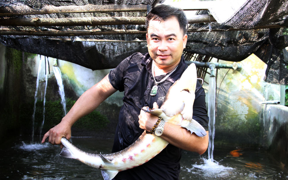 """Thái Nguyên: Cá lạ nuôi dưới chân núi Voi Đầm là loài cá gì mà con to bự, """"ôm"""" cật lực mới xuể"""