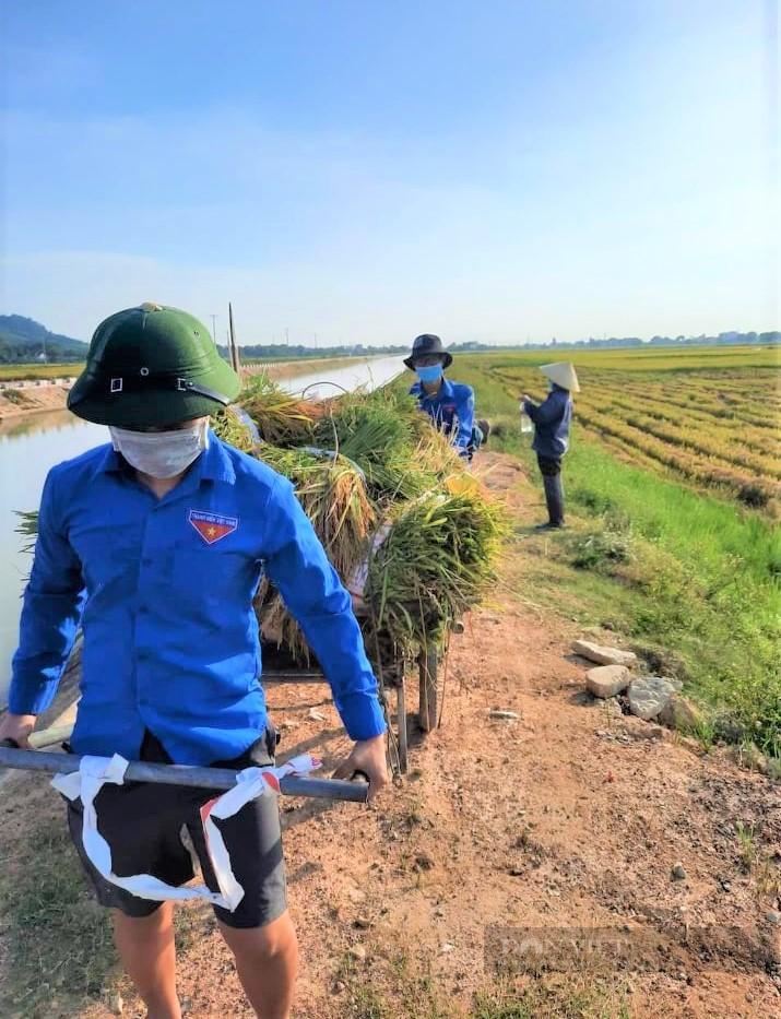 """Nghệ An: Nông dân tự giác phòng dịch, """"áo xanh"""" gặt lúa giúp dân vùng giãn cách xã hội - Ảnh 3."""