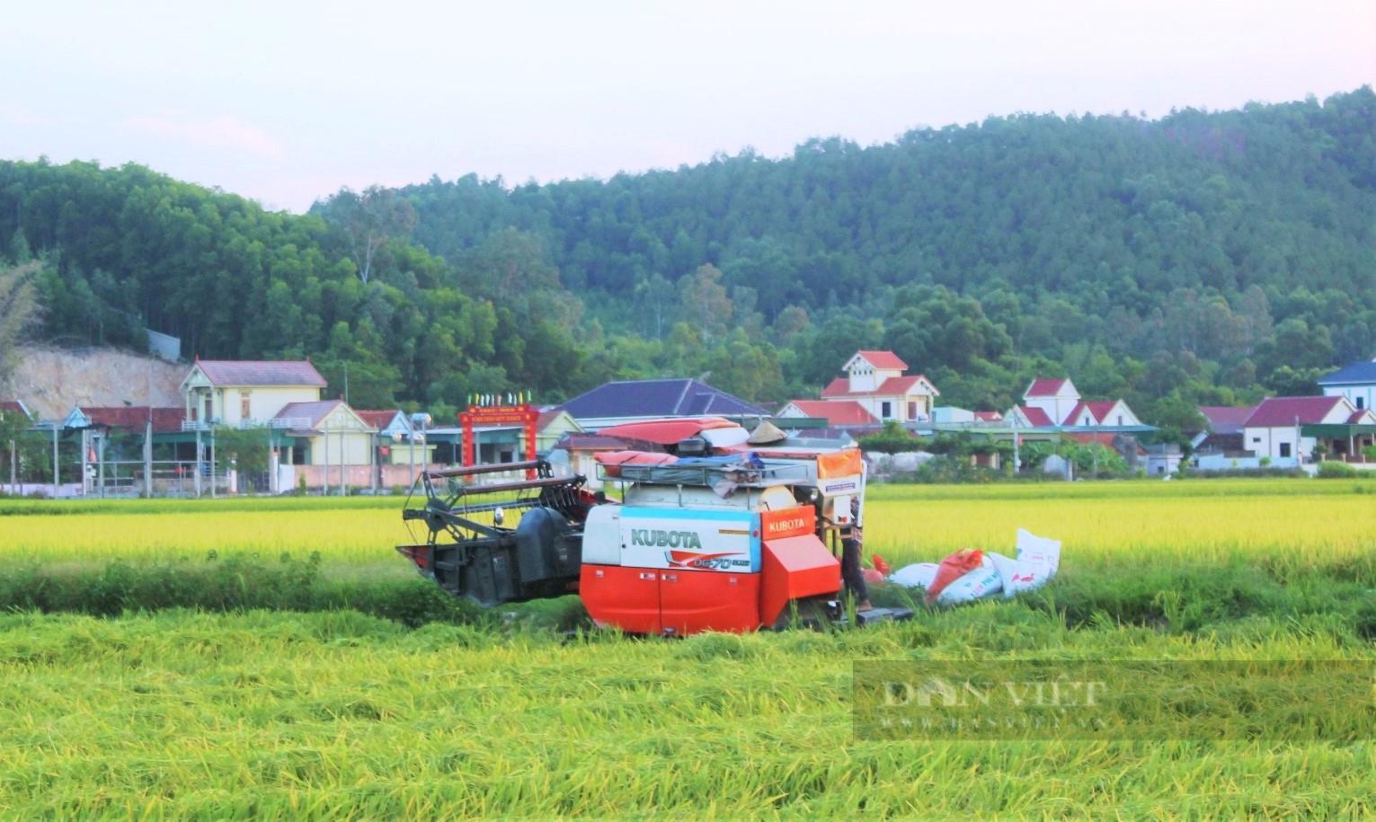 """Nghệ An: Nông dân tự giác phòng dịch, """"áo xanh"""" gặt lúa giúp dân vùng giãn cách xã hội - Ảnh 1."""