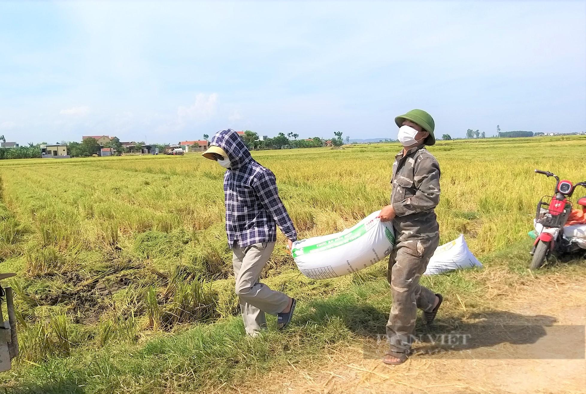 """Nghệ An: Nông dân tự giác phòng dịch, """"áo xanh"""" gặt lúa giúp dân vùng giãn cách xã hội - Ảnh 8."""