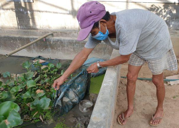 Phú Yên: Nuôi lươn trong bể xi măng, sau 8 tháng bắt bán toàn con to, nhà nông khá giả hẳn lên - Ảnh 2.