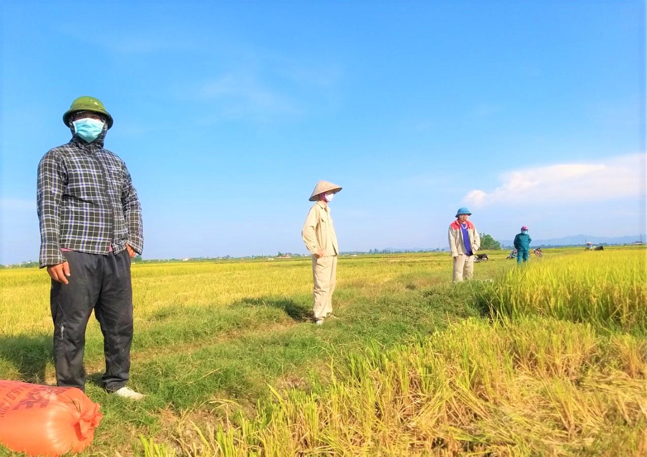 """Nghệ An: Nông dân tự giác phòng dịch, """"áo xanh"""" gặt lúa giúp dân vùng giãn cách xã hội - Ảnh 6."""