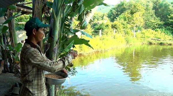 Ông Kiều rải thức ăn cho đàn cá. Ảnh: Hội Nông Dân Bình Phước