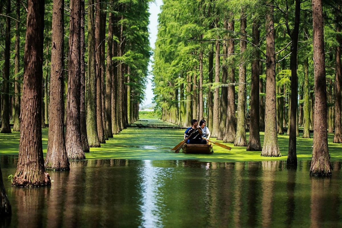 Chiêm ngưỡng vẻ đẹp lạ lùng của rừng tùng và thủy sam gỗ đỏ quý hiếm ở Trung Quốc - Ảnh 4.