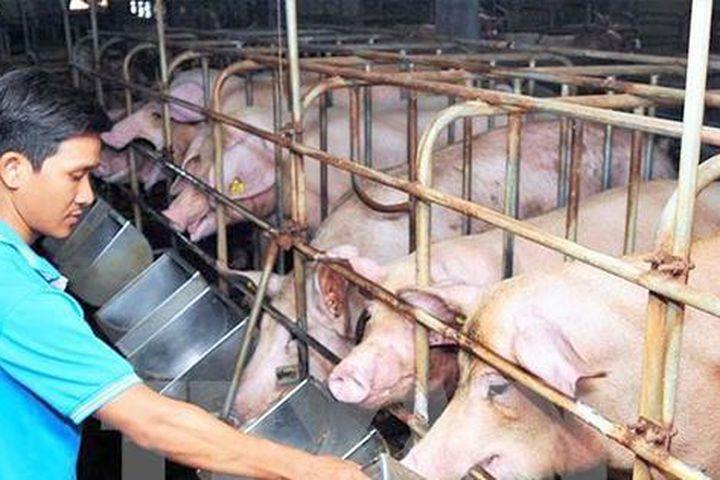 Giá thức ăn chăn nuôi tiếp tục tăng lần thứ 8, có doanh nghiệp tăng tới 9 lần - Ảnh 1.