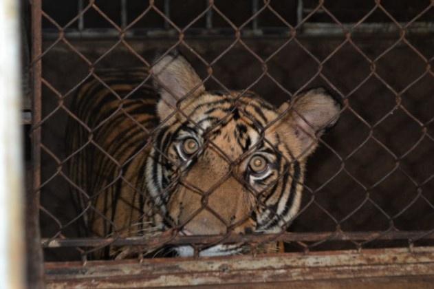 ẢNH: Bên trong hầm nuôi 17 con hổ ở Nghệ An - Ảnh 4.