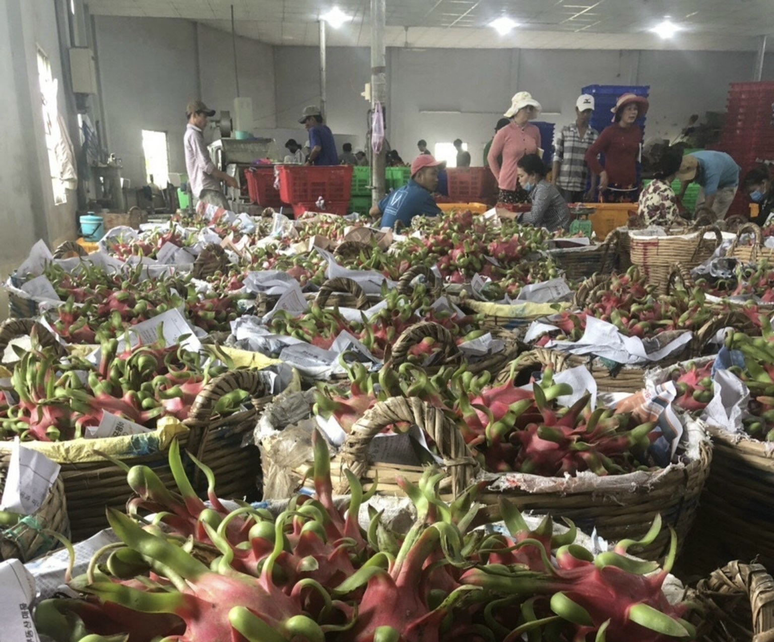 Trung Quốc siết chặt nhập khẩu nông sản, Bộ NN&PTNT đang nỗ lực kết nối thị trường - Ảnh 1.