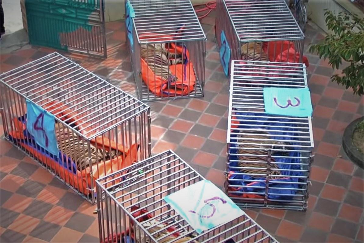 ẢNH: Bên trong hầm nuôi 17 con hổ ở Nghệ An - Ảnh 5.