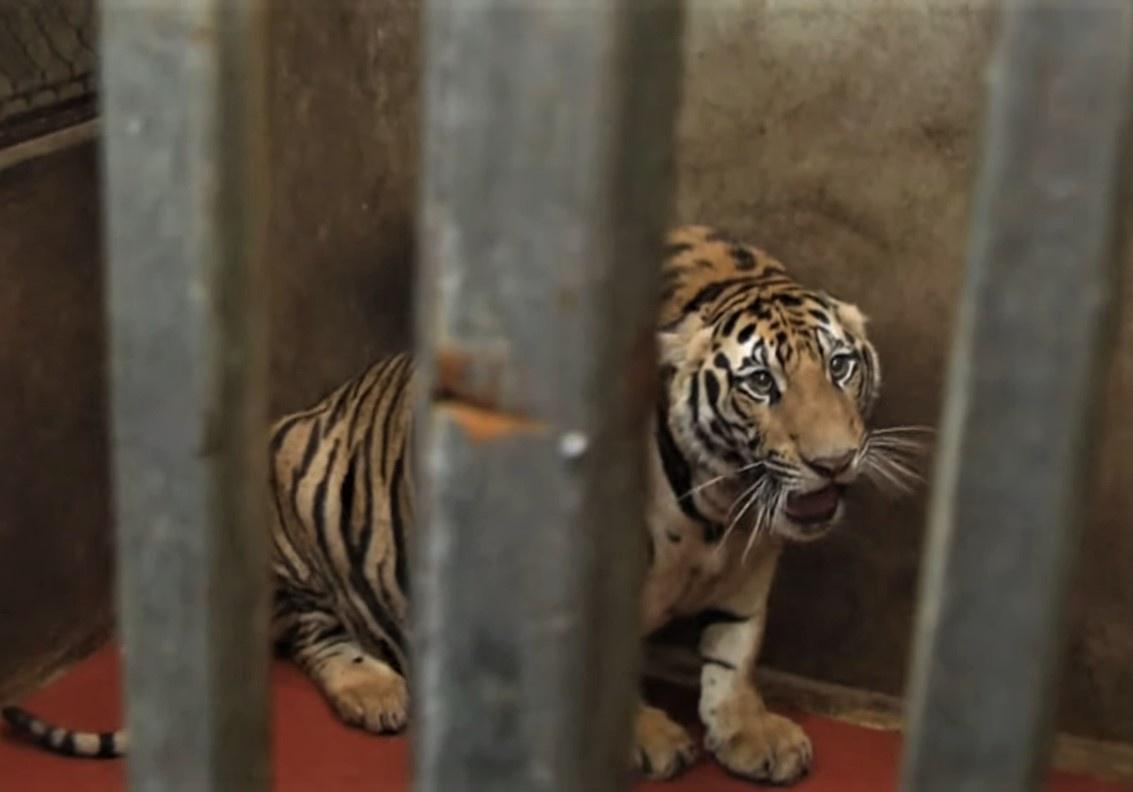 ẢNH: Bên trong hầm nuôi 17 con hổ ở Nghệ An - Ảnh 3.