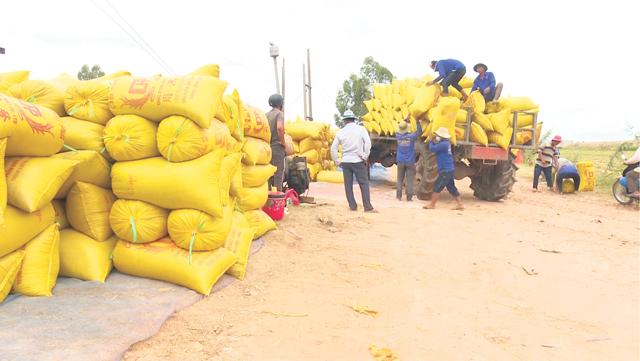Nguy cơ khủng hoảng thiếu gia cầm, Bộ NNPTNT kiến nghị khẩn Thủ tướng tiêm vaccine cho lao động nông nghiệp - Ảnh 2.