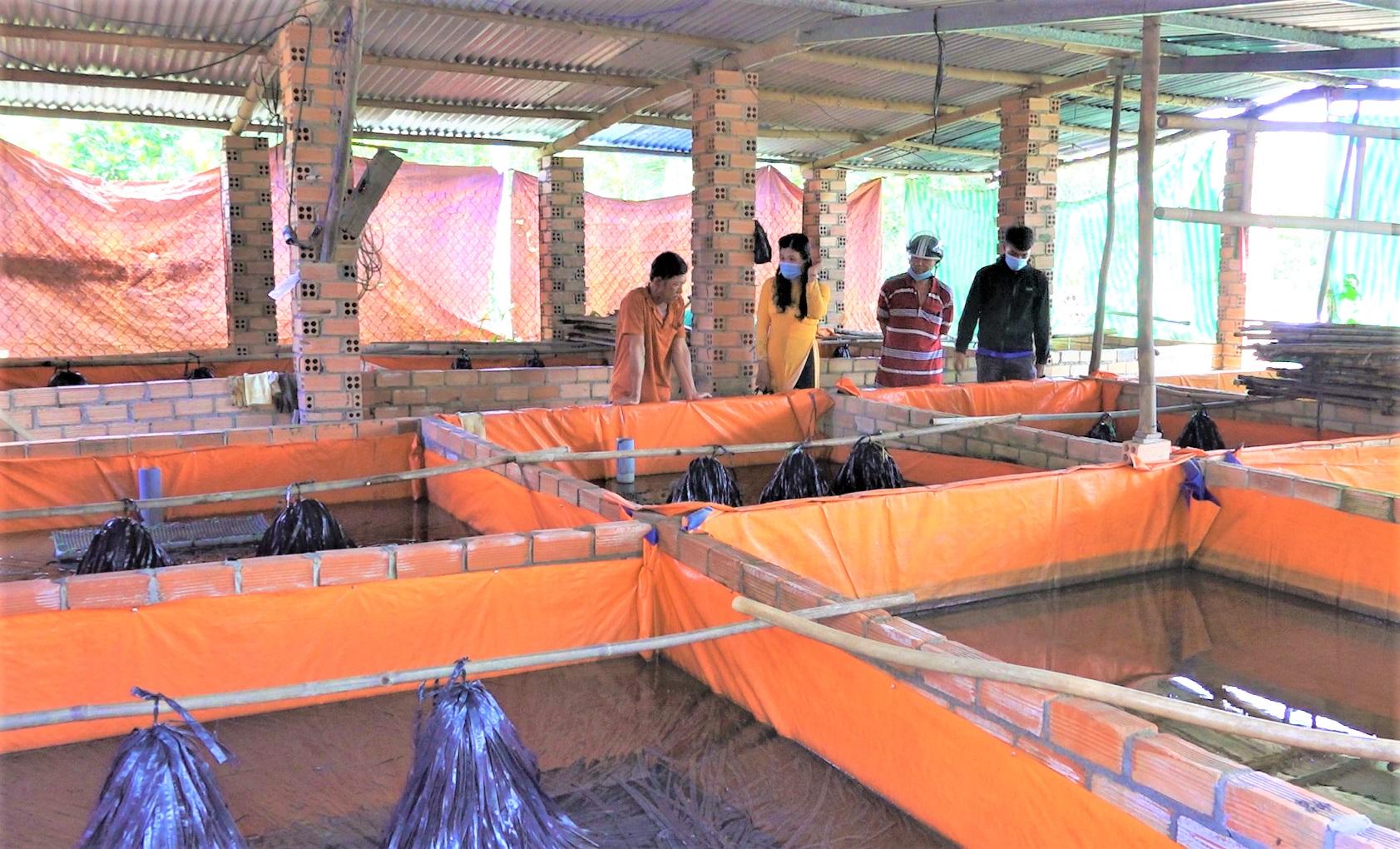Đồng Nai: Nông dân giàu nhờ xây bể xi măng nuôi lươn không bùn dày đặc, nhiều người kéo đến xem - Ảnh 1.