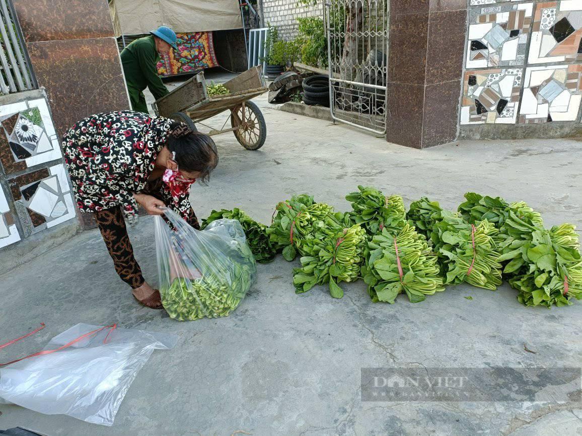 """Nghệ An: Hàng nghìn tấn rau đang """"nằm ruộng"""" chờ đầu ra... - Ảnh 8."""
