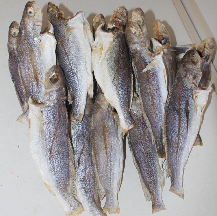 Loài cá chỉ cần nghe tên đã muốn phì cười, trước rẻ bèo nay được lột xác, còn bán ra nước ngoài - Ảnh 1.