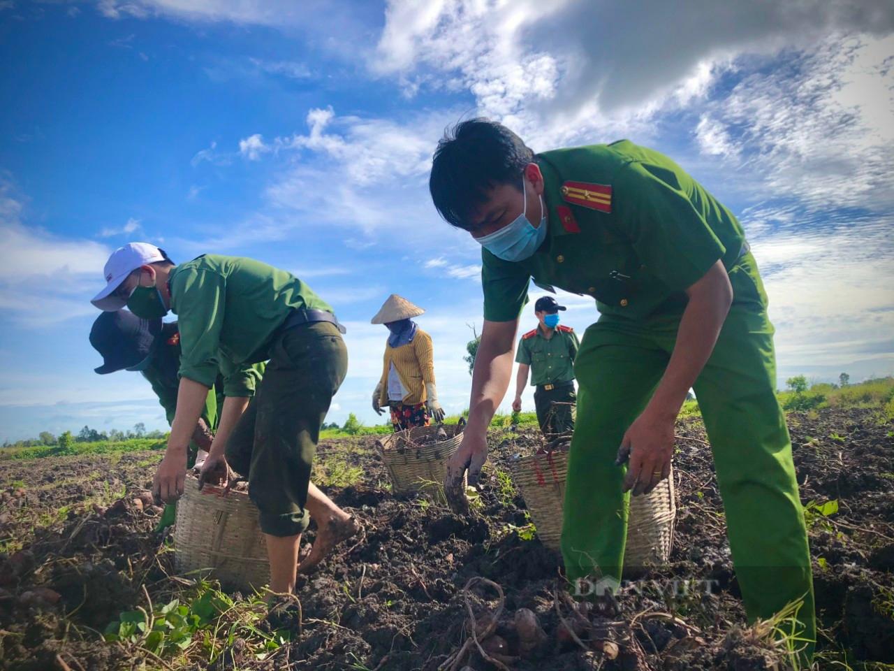 Công an huyện Giồng Riềng giúp nông dân tiêu thụ gần 180 tấn khoai lang - Ảnh 1.