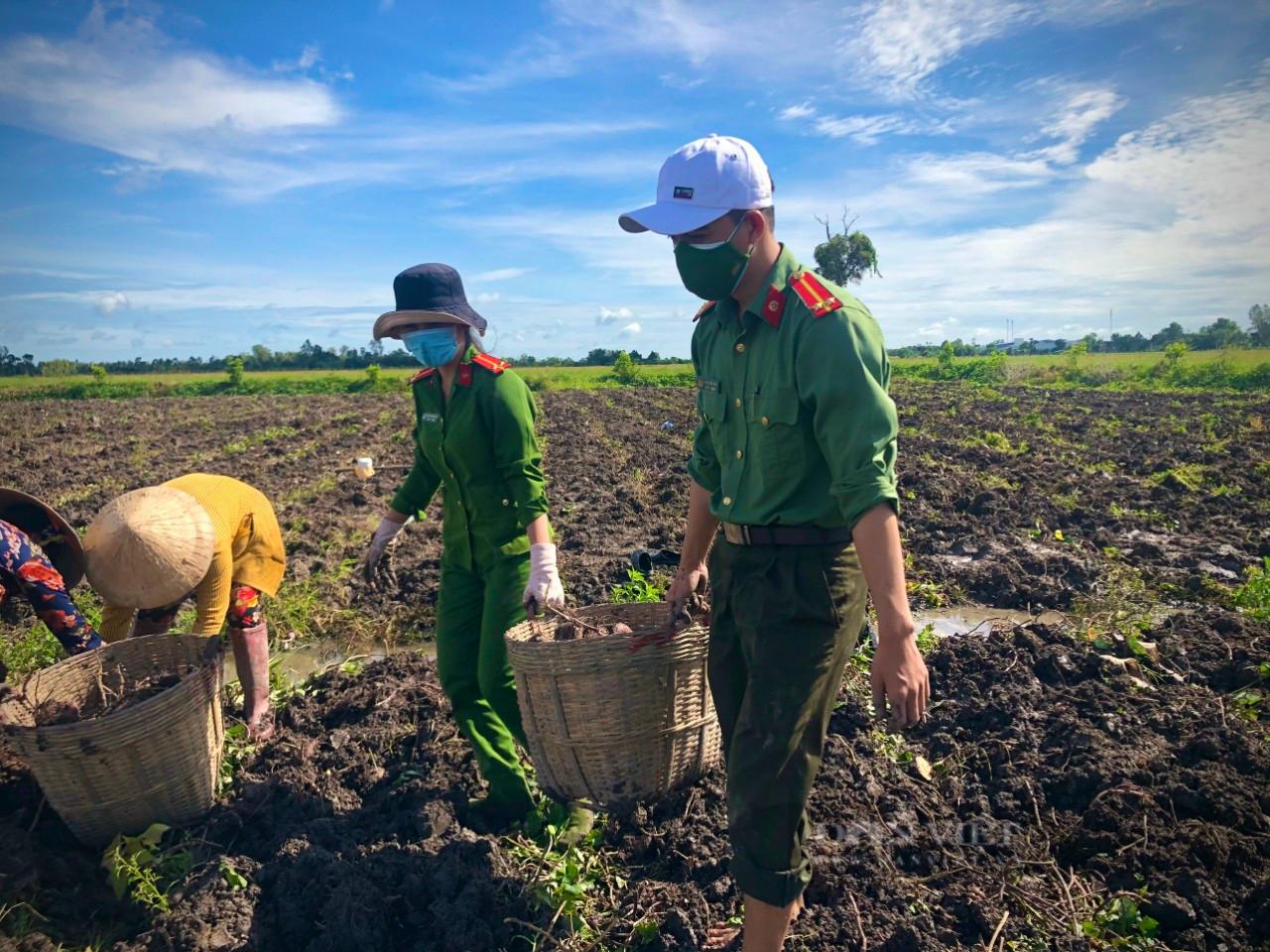 Công an huyện Giồng Riềng giúp nông dân tiêu thụ gần 180 tấn khoai lang - Ảnh 4.