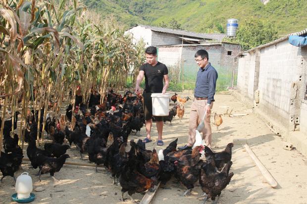Hà Giang: Anh nông dân giỏi nuôi gà xương đen, cứ nuôi lớn con nào, lái buôn giành mua hết - Ảnh 1.