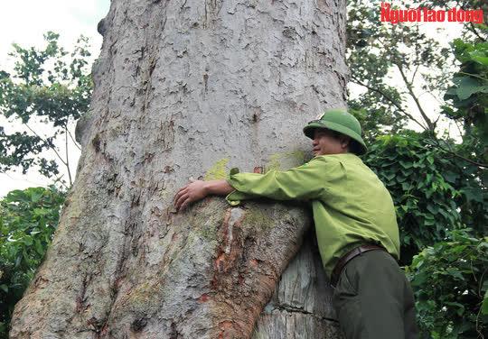 Ngắm cụ lim xanh ngàn năm tuổi duy nhất ở xứ Thanh - Ảnh 7.