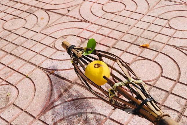 Cây thị lạ ở Hà Tĩnh: Thân cây mục rỗng nhưng gốc vẫn tươi tốt lạ thường, cho cả tạ quả - Ảnh 16.
