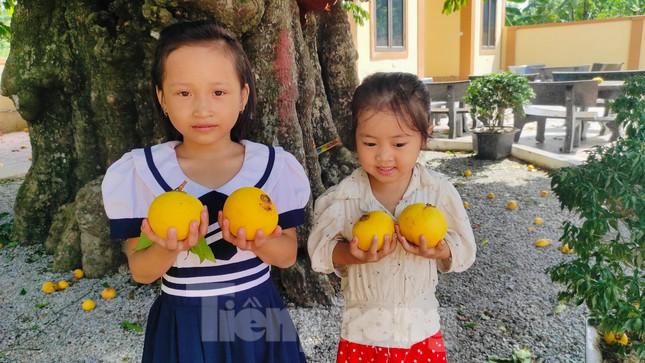 Cây thị lạ ở Hà Tĩnh: Thân cây mục rỗng nhưng gốc vẫn tươi tốt lạ thường, cho cả tạ quả - Ảnh 20.