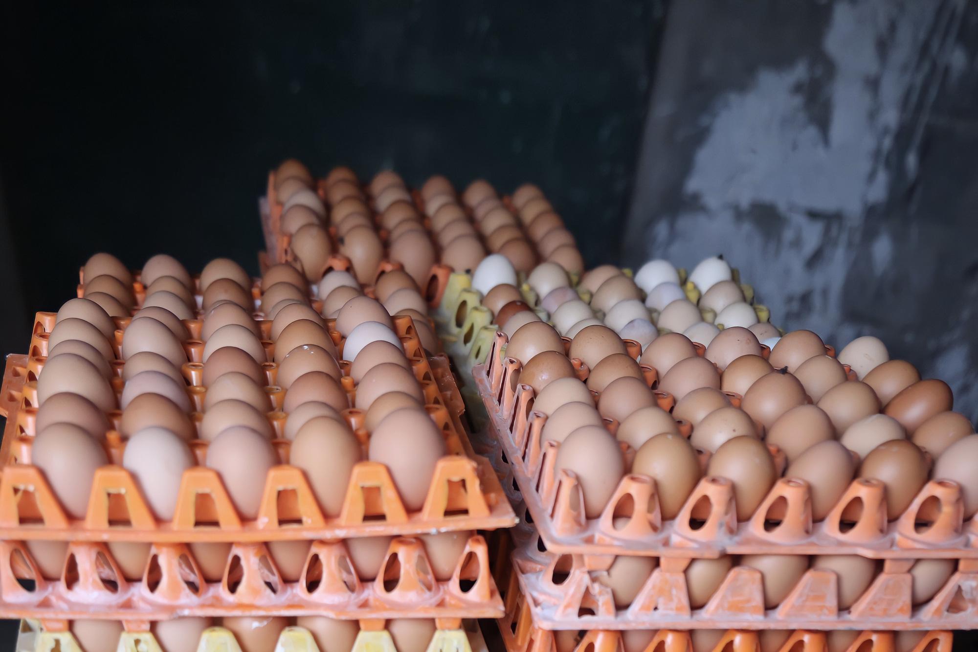 Kinh tế 24h: Bình Dương mỗi ngày ế đọng 2 triệu quả trứng - Ảnh 3.
