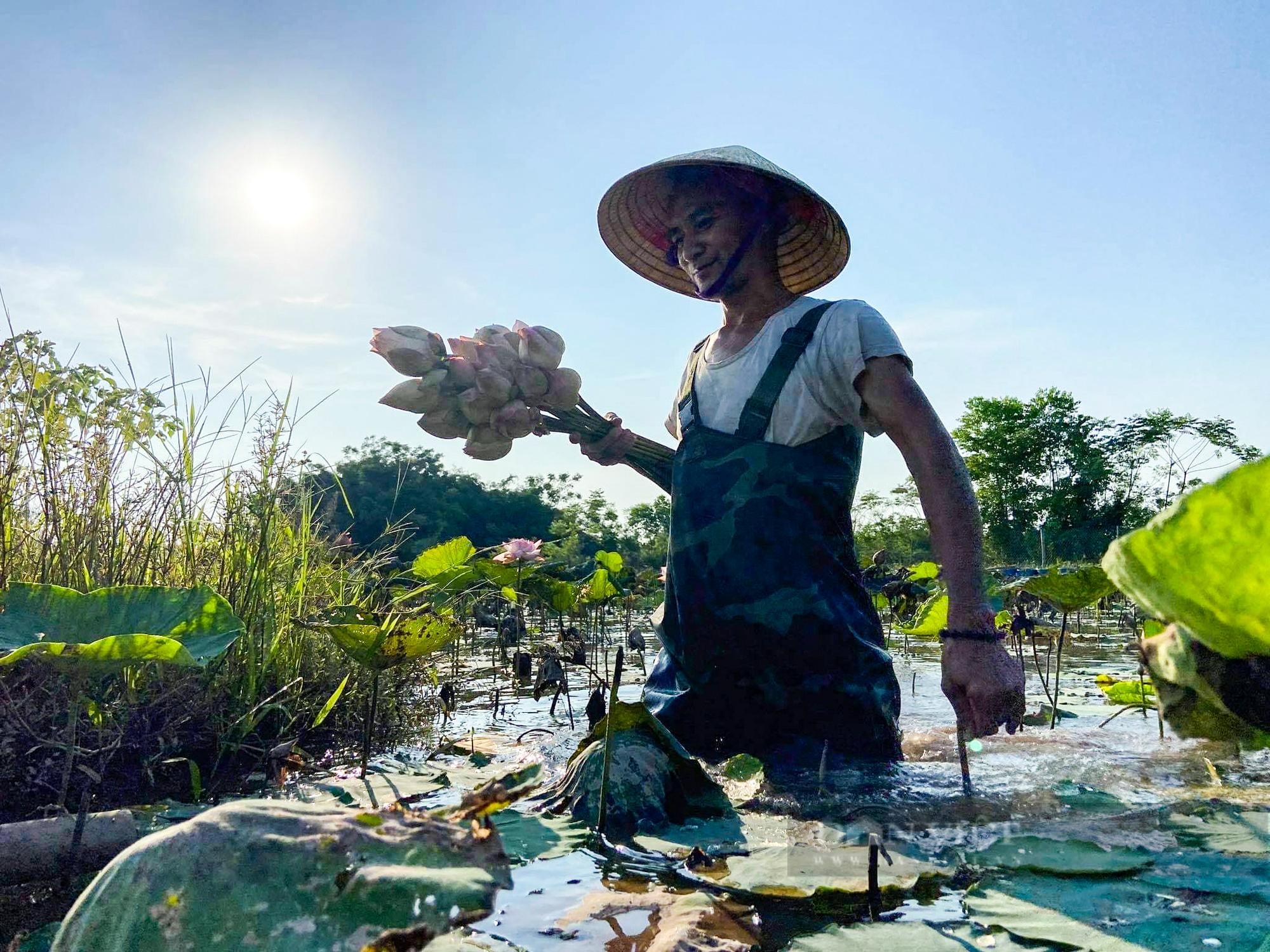 Hà Nam: Trồng hoa súng, hoa sen cảnh - Ảnh 2.