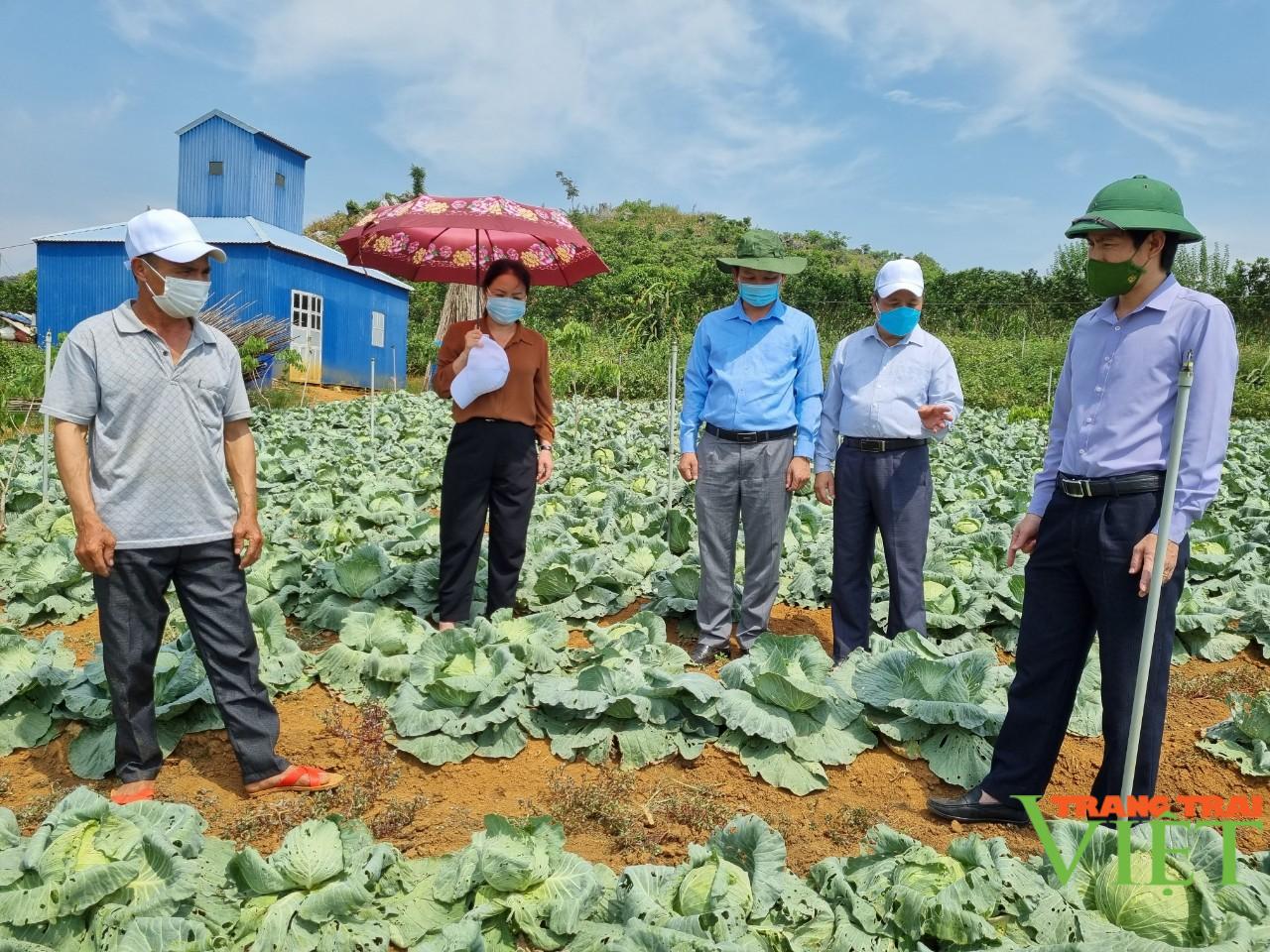 Sơn La: Hiệu quả mô hình sản xuất rau an toàn trái vụ theo hướng hữu cơ  - Ảnh 1.