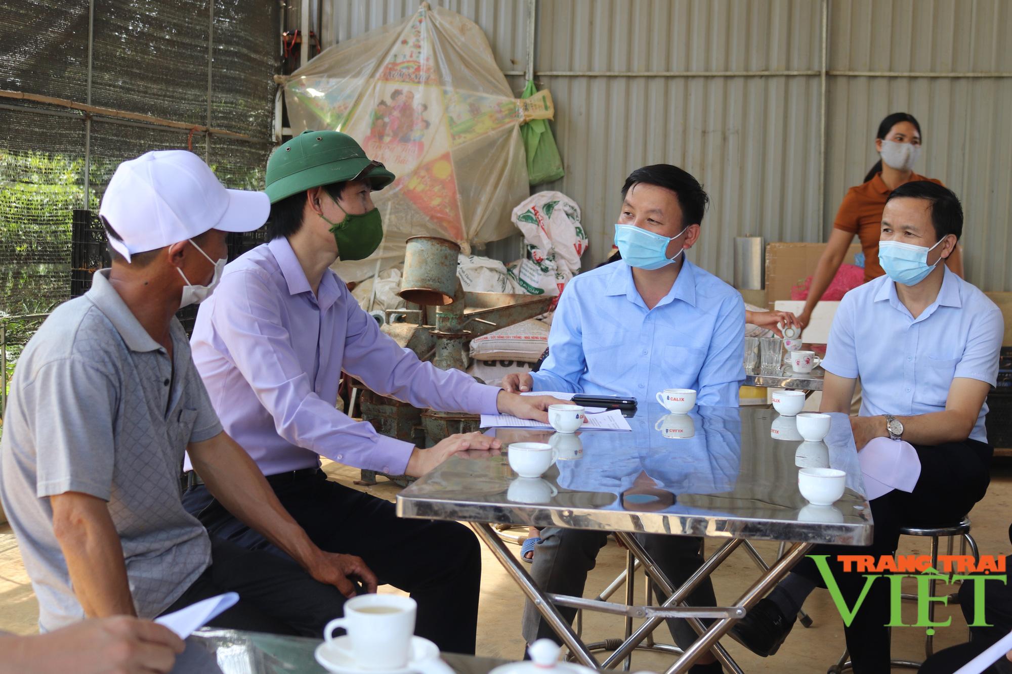 Sơn La: Hiệu quả mô hình sản xuất rau an toàn trái vụ theo hướng hữu cơ  - Ảnh 3.
