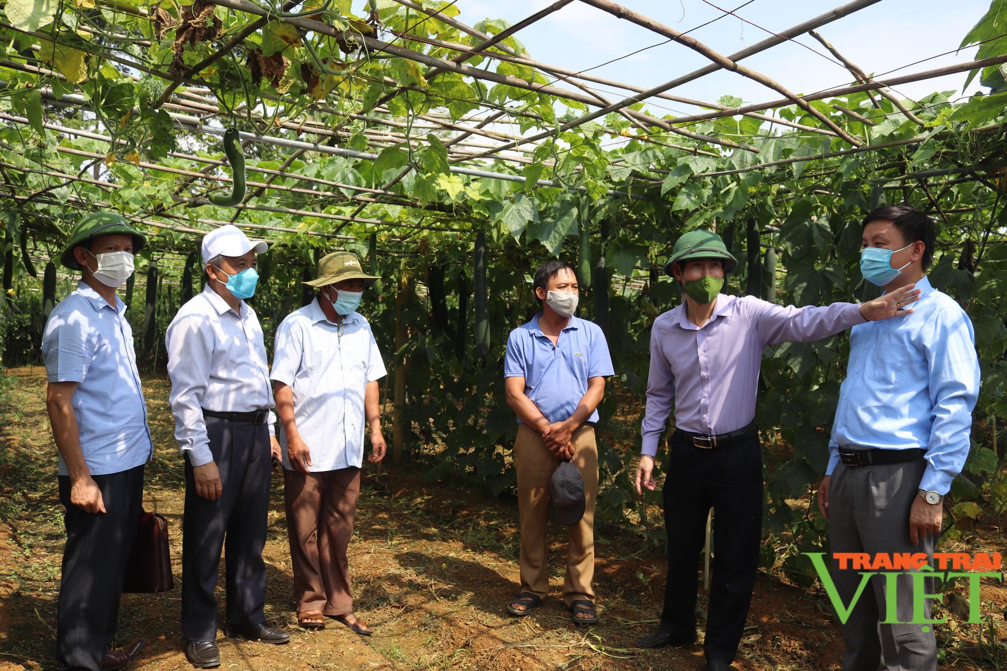 Sơn La: Hiệu quả mô hình sản xuất rau an toàn trái vụ theo hướng hữu cơ  - Ảnh 4.