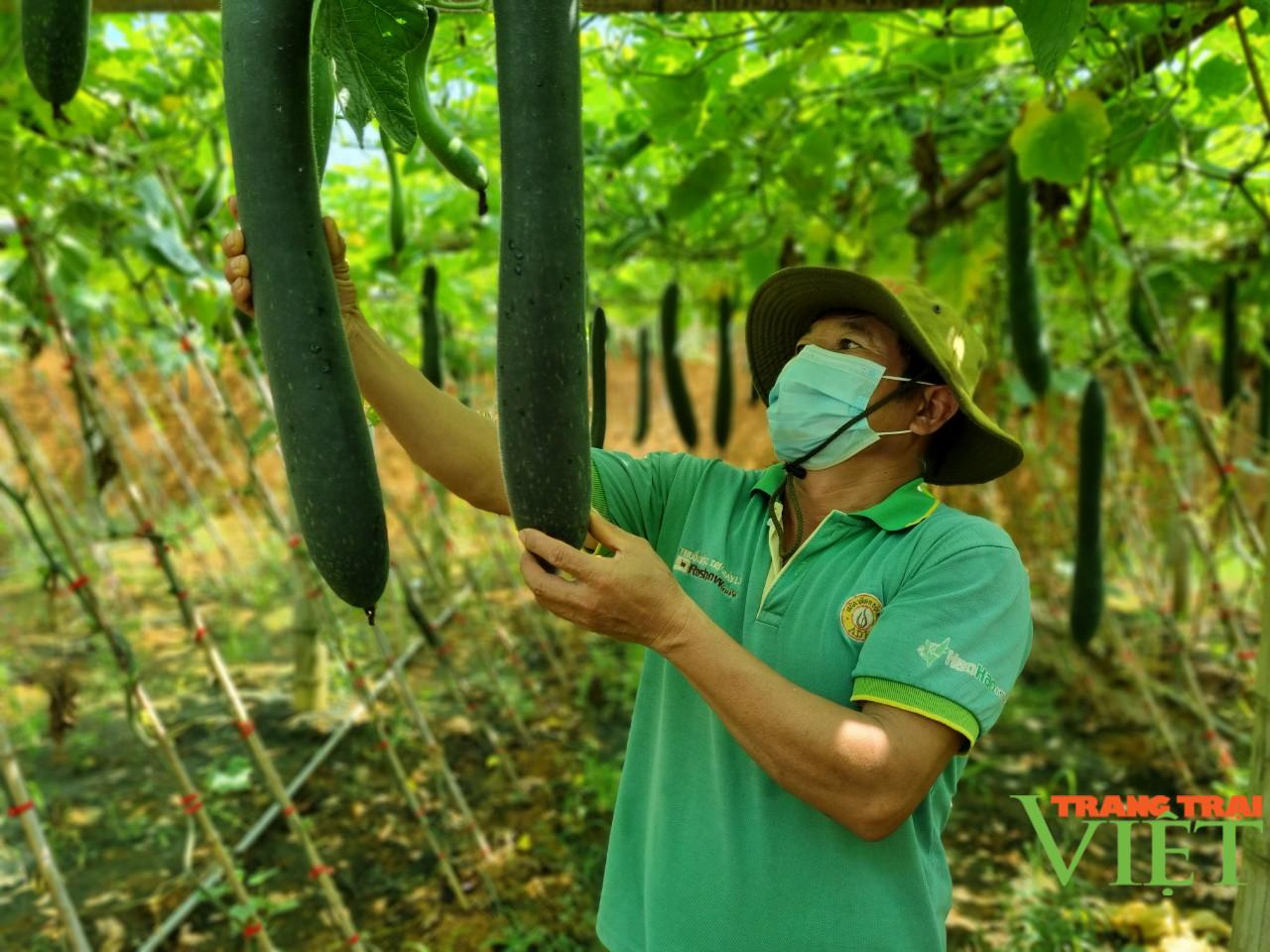 Sơn La: Hiệu quả mô hình sản xuất rau an toàn trái vụ theo hướng hữu cơ  - Ảnh 5.