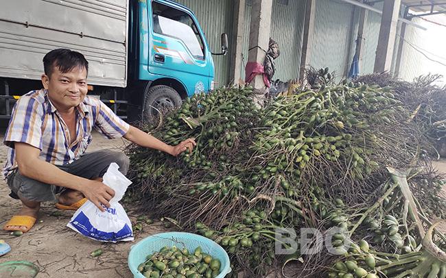 """Dịch giã như thế, nhiều nông sản """"rớt giá thua đau"""", nông dân trồng cau Bình Định lại thắng lớn"""