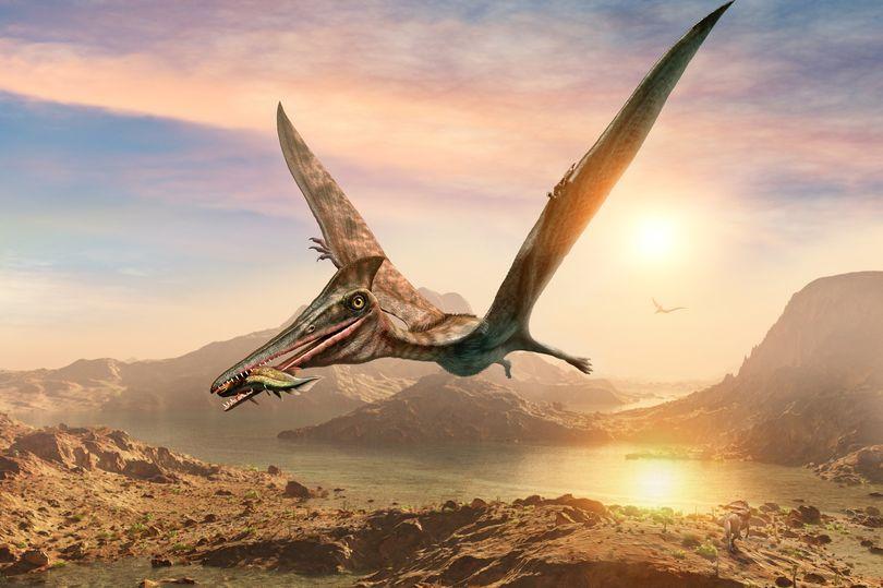 """Hóa thạch khủng long cổ đại với tên gọi """"rồng bay"""" khiến các nhà khoa học sửng sốt - Ảnh 1."""