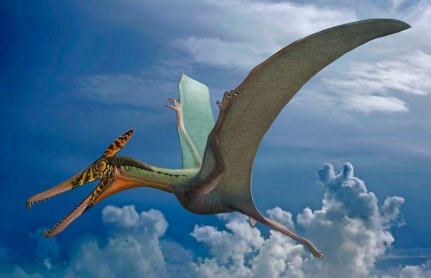 """Hóa thạch khủng long cổ đại với tên gọi """"rồng bay"""" khiến các nhà khoa học sửng sốt - Ảnh 3."""