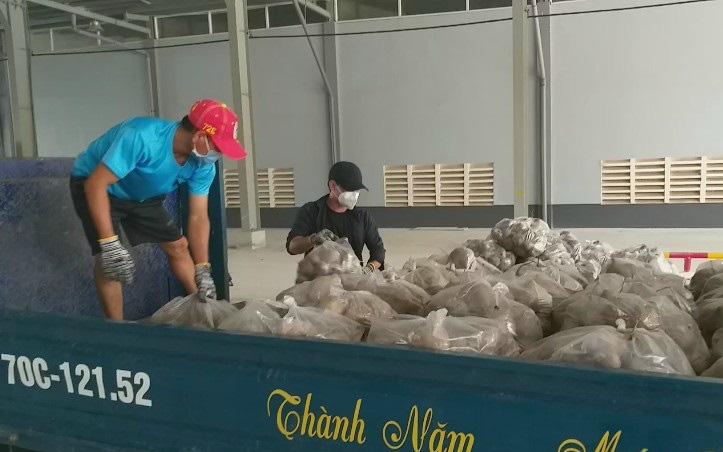 Tây Ninh: Trồng thứ cây bò khắp ruộng, cuốc lên phơi củ la liệt, bán nhỏ giọt, nông dân ngao ngán