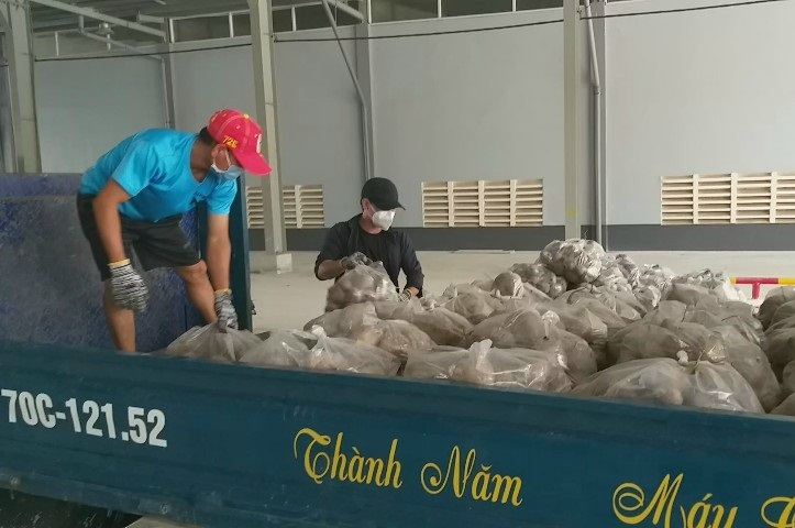 Tây Ninh: Trồng thứ cây bò khắp ruộng, cuốc lên phơi củ la liệt, bán nhỏ giọt, nông dân ngao ngán - Ảnh 1.