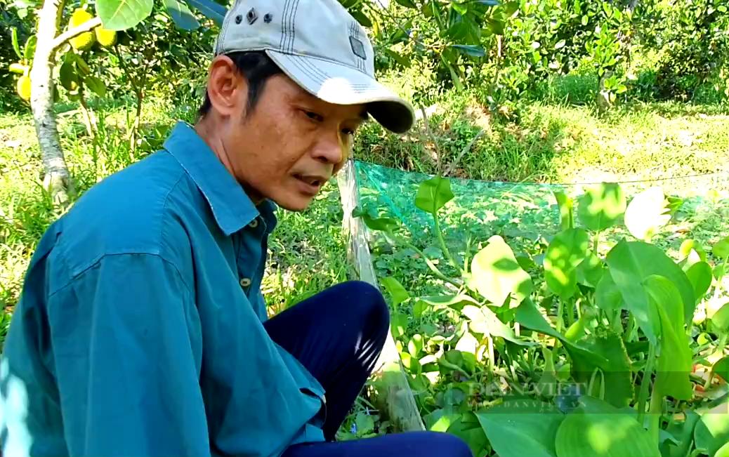 Tiền Giang: Độc đáo nuôi loài đặc sản sống hoang dã lấy trứng bán, anh nông dân thu tiền triệu mỗi ngày - Ảnh 1.